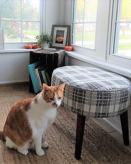 hello-fall-printable-with-orange-cat-photo