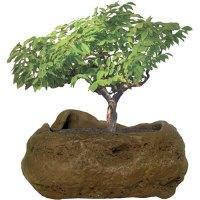 Bonsai Rock Garden - Optimus Toys