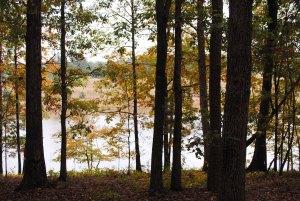 Adamson Lake, GA