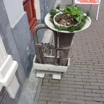 1362: Trompet Plant