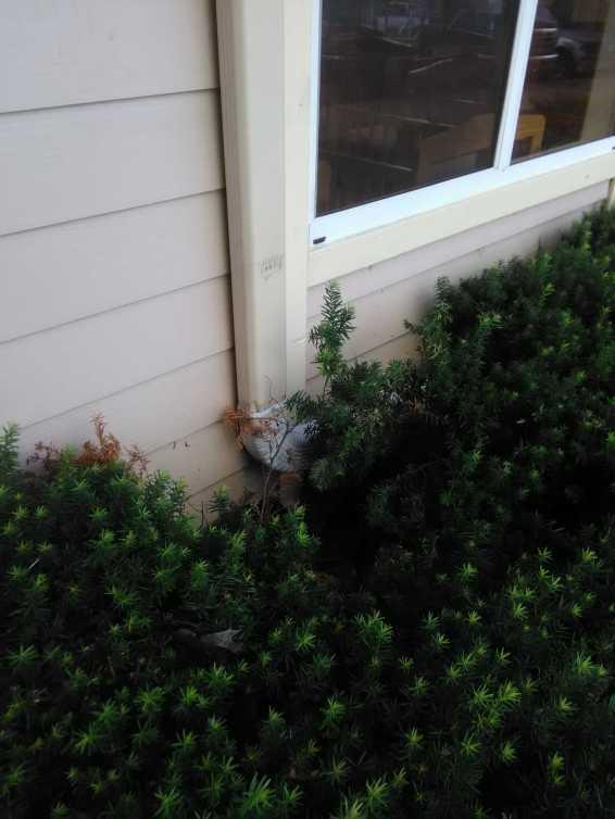 La Petite Roof Leak 7