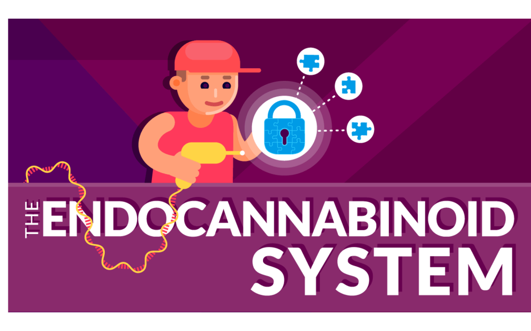 Endocannabinoid System Infographic: From Genes To Neurons