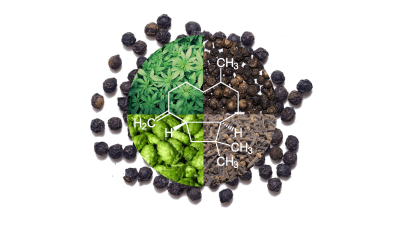 Beta-caryophyllene terpene with pepper and cloves and hops
