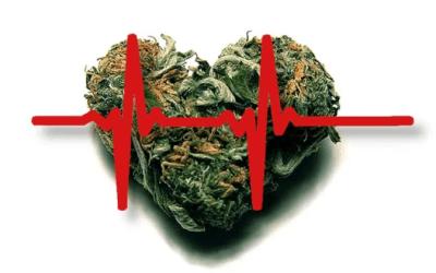 Strain Genie Has Been Featured in Cannabis Magazine