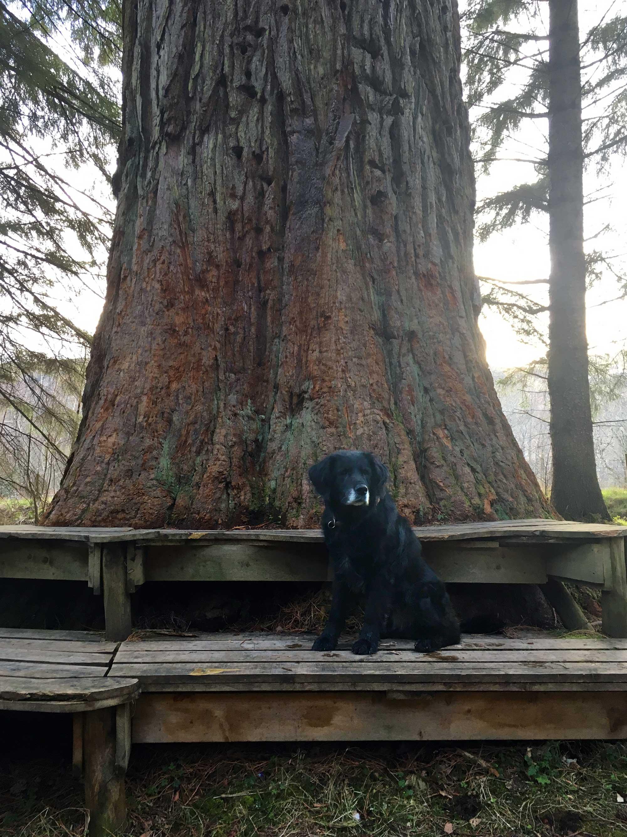 Blixa vor einem Mamutbaum