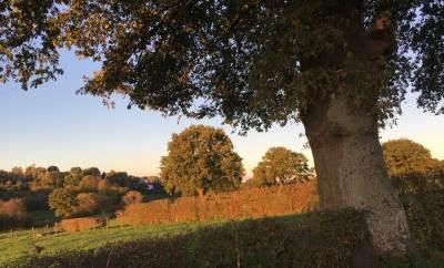 Abendliche Herbststimmung bei Eupen