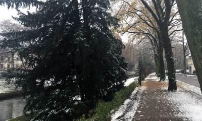 Die Hönne im Schnee