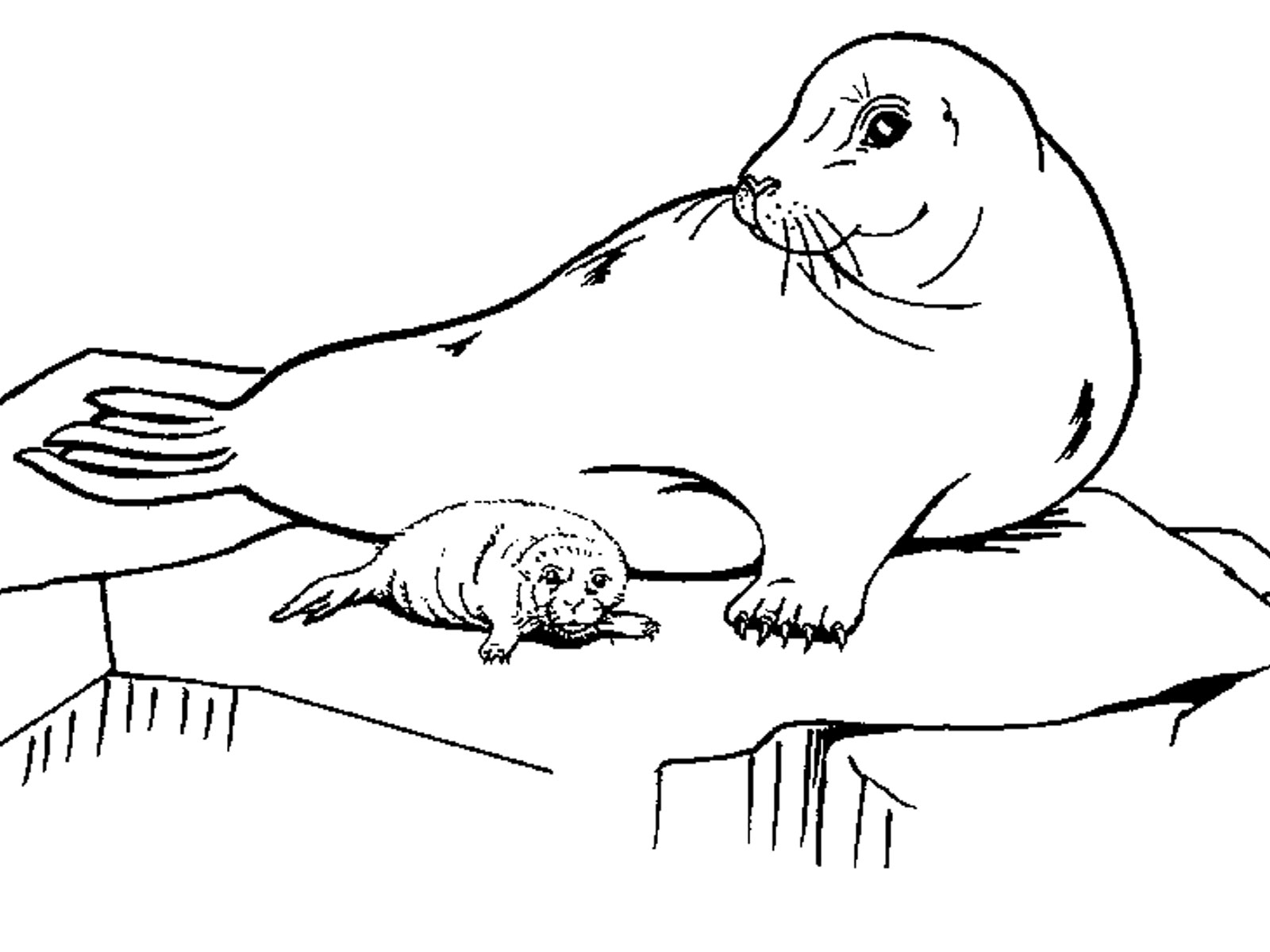 Antarctica Printable Coloring Pages