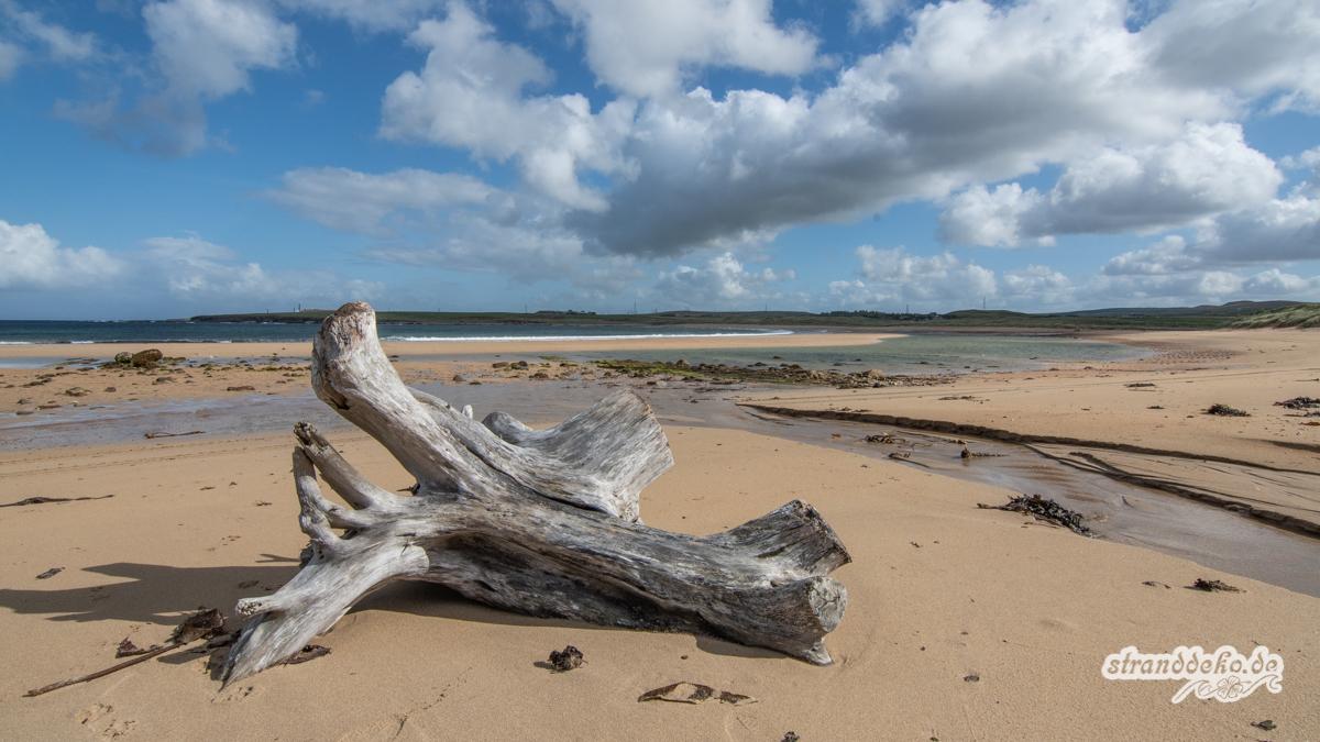 Schottland II 442 - Schottland - III - auf Strandsuche - Dunnet Beach, Thurso, Tongue
