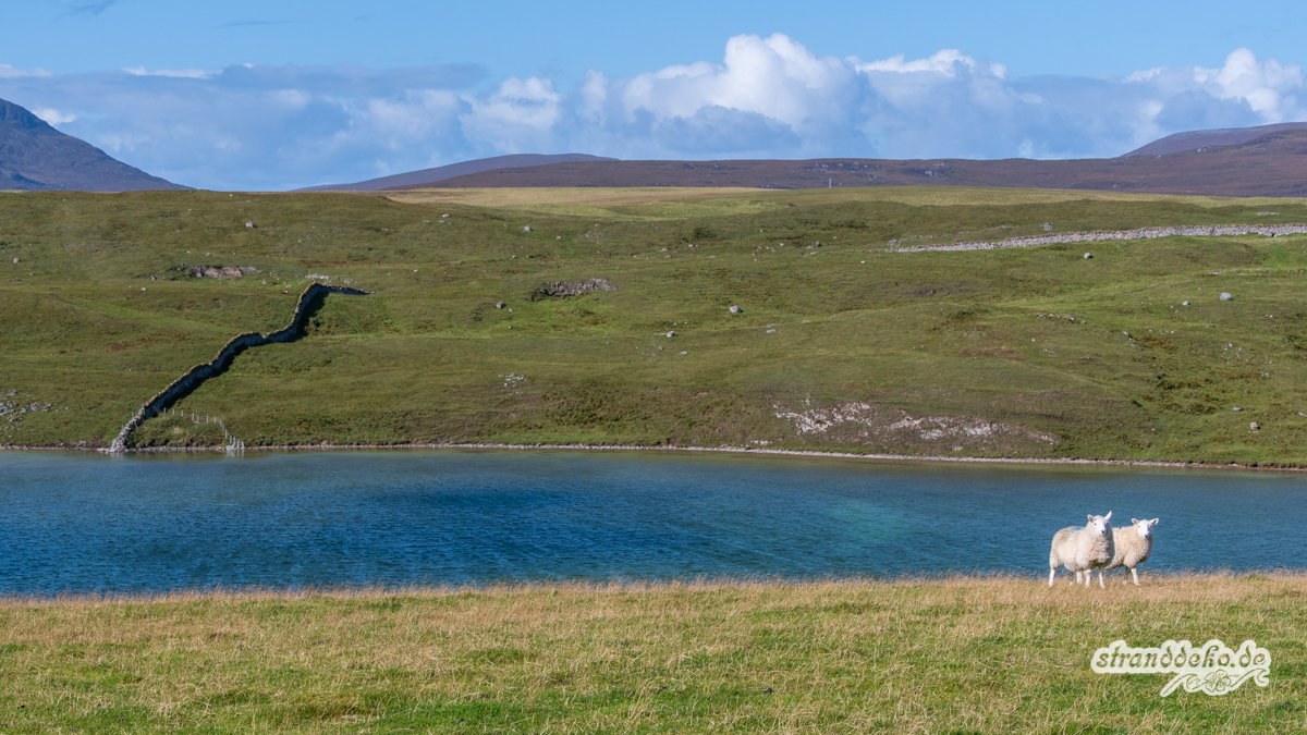 Schottland IV 825 - Schottland IV - Durness - der Superstrand