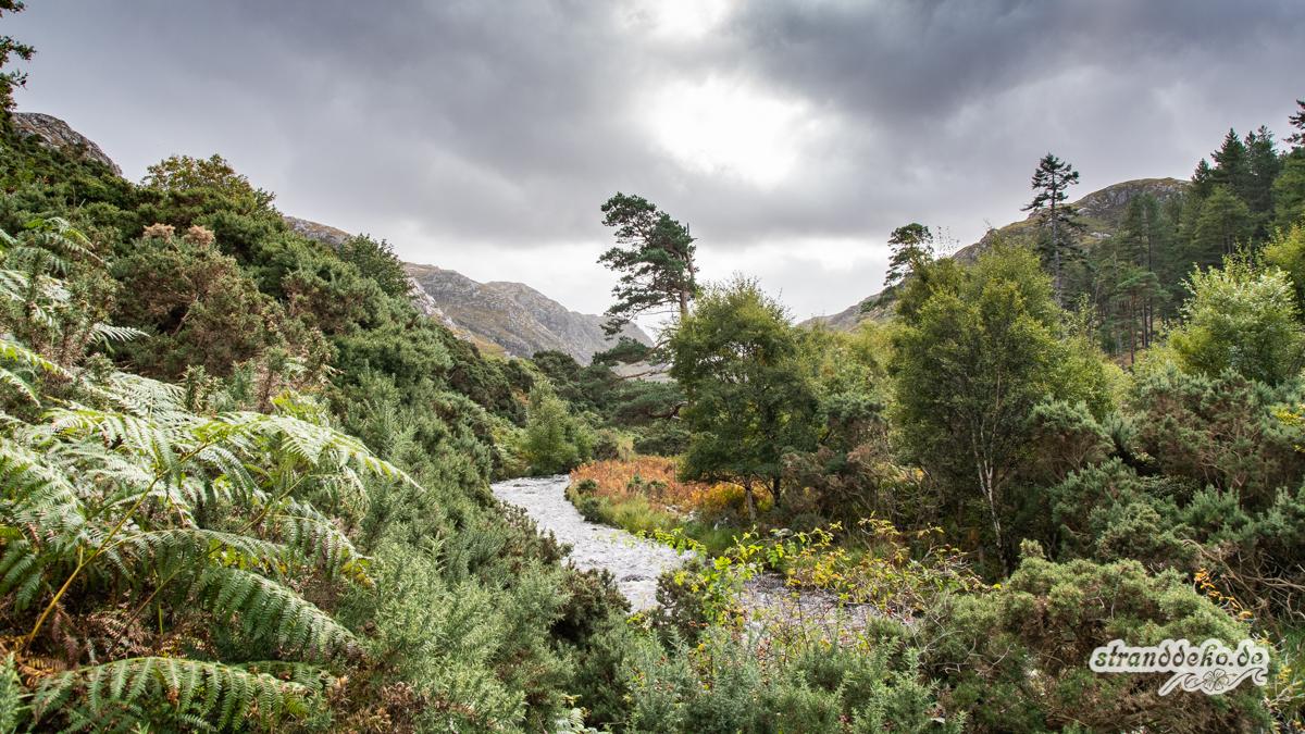 Schottland V 1081 - Schottland - V- Wandertage in Wester Ross