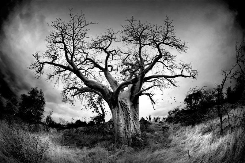 The Tree av fotograf Velter