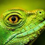 Several Lizard head photos taken at Zoo Frankfurt