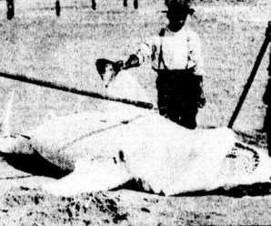 Top 10 Brutal Nineteenth Century Shark Attacks
