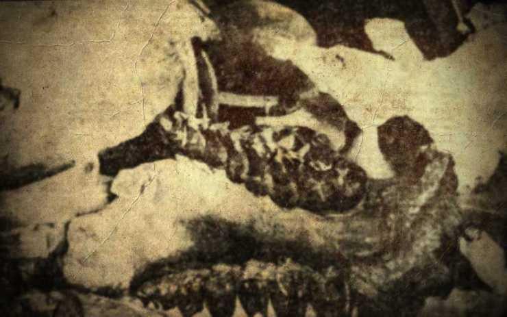 Νεκροταφείο προϊστορικών ζώων στο Πικέρμι (Μέρος Β)...