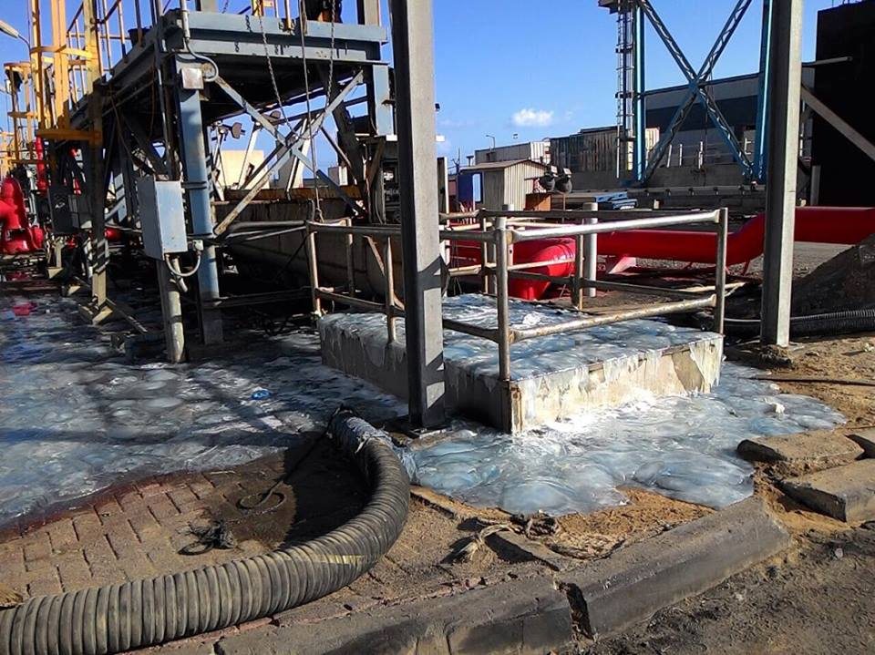 jellyfish israel power plant, jellyfish israel power plant die-off, jellyfish die-off israel, mass die-off 2015, latest mass die-off june 2015, jellyfish israel