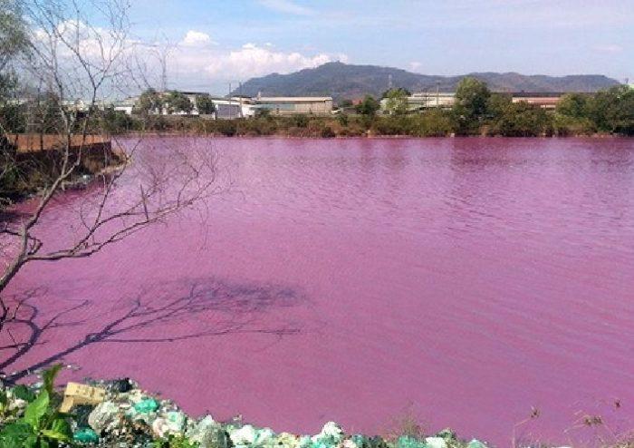 pink water vietnam, pink water vietnam pictures, pink water vietnam videos, Pink water in large reservoir turns pink in Vietnam