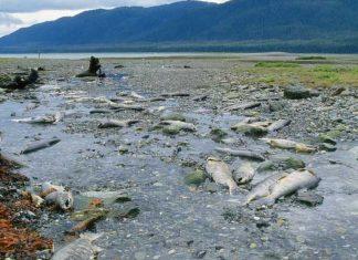 alaska mercury permafrost, alaska melting permafrost mercury, mercury in melting permafrost in alaska