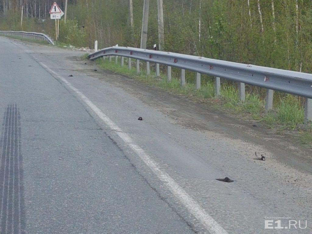 dead birds fall from sky russia, dead birds fall from sky russiapictures, dead birds fall from sky russia june 2018
