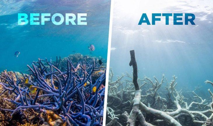 australia coral reef geoengineering, australia coral reef geoengineering crisis