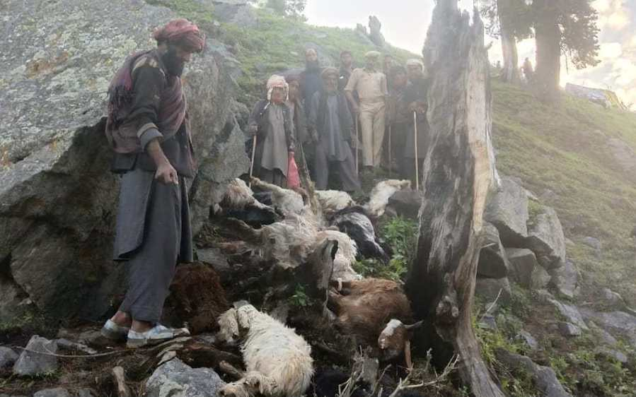 170 sheep and goats killed by lightning kashmir india, video, 170 sheep and goats killed by lightning kashmir india picture