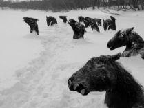 Caballos fríos