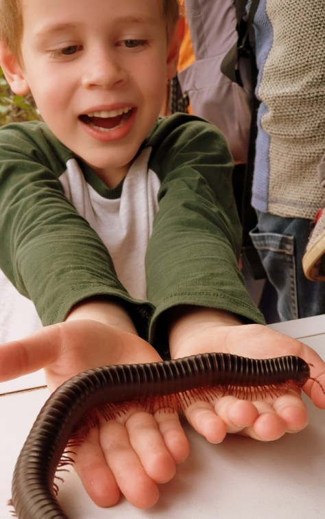 """My son holding the """"tickly"""" African giant millipede ©Stratfordblog.com"""