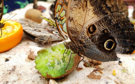 Use Tesco Clubcard vouchers in Stratford-upon-Avon at the butterfly farm ©Stratfordblog.com