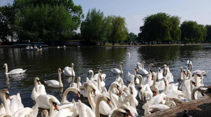 Top 5 Stratford-upon-Avon summer experiences