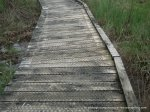Boardwalks make much of the area accessible, even in winter or after rain.