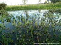 A wetland within a Grassy Woodland near Earlston.
