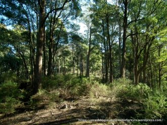 Lightning Ridge Tk forest
