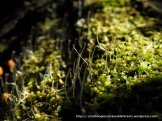 This moss was also reproducing.