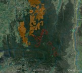 Satellite image showing coupes Vicforests wants to log in the next three years (Parlour's coupe indicated). Pine plantations shaded brown. Major waterways in blue.