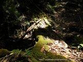 Blackwood Wattle roots form a natural bridge over the Kangaroo Creek.