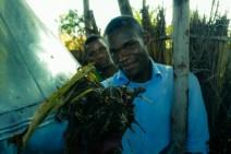 Raw compost