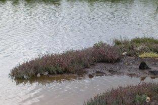 Mason Park Wetlands 6