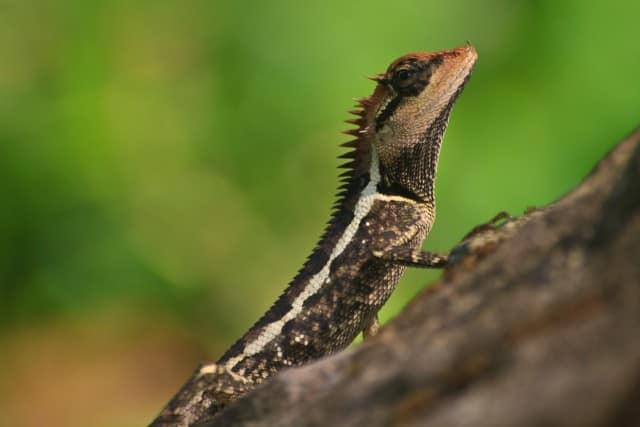 Reptile Show Insurance