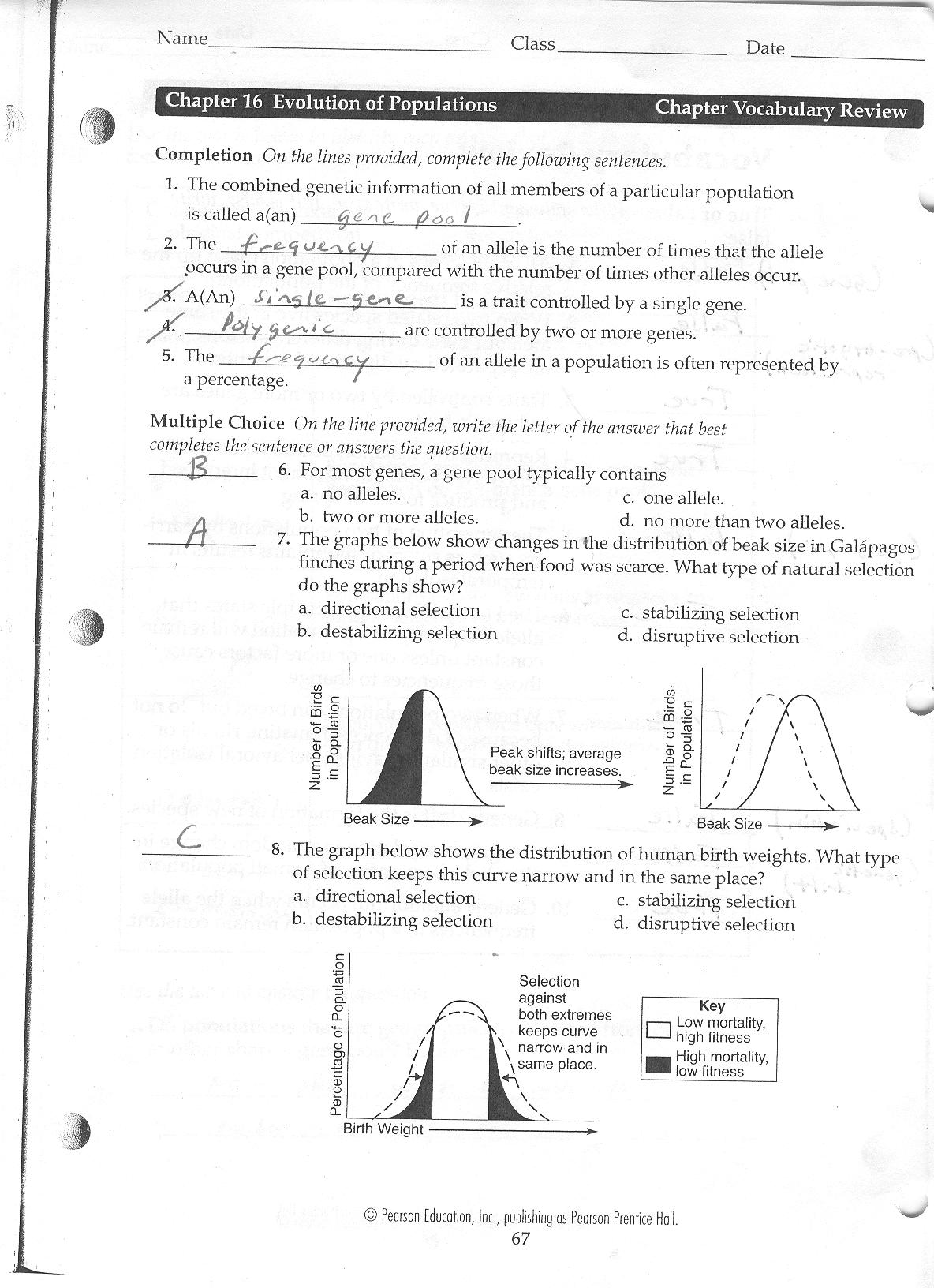 Worksheet Evidence Of Evolution Worksheet Worksheet Fun