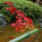 京都の紅葉で長岡京や八幡市の穴場を厳選!長岡天満宮・向日神社・善法律寺!