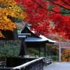 京都の紅葉で山科区の穴場を厳選②!青龍殿・日向大神宮・岩屋寺・山科聖天!