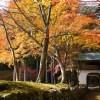 京都の紅葉で左京区の穴場を厳選⑤!阿弥陀寺・白龍園・三明院!