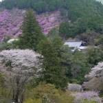 京都の桜 おすすめの穴場撮影スポット|右京区編⑤|常照皇寺・福徳寺・西明寺