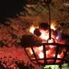京都 桜の名所|東山区編②|円山公園・知恩院・祇園白川
