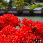 京都のつつじの名所 おすすめの厳選スポット3選!見頃や見どころは?