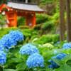京都のあじさいの名所や穴場!おすすめ15選の見頃や見どころ情報!