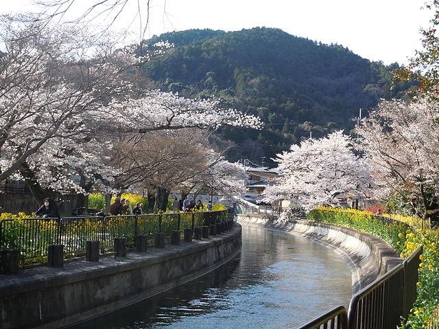 Yamasina_Lake_Biwa_Canal_and_Cherry_Blossom_Viewing_(5)