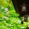 長谷寺・鎌倉大仏の駐車場で安い料金の周辺おすすめマップ&全リスト!