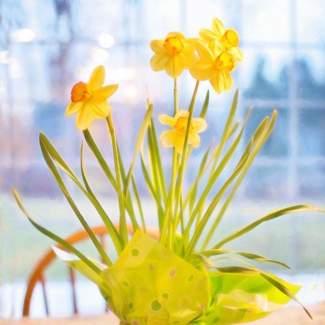 Birth Month Flowers - March - Daffodil