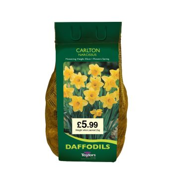 Taylors Bulbs DC64 Narcissus Carlton available from Strawberry Garden Centre, Uttoxeter